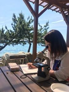 琵琶湖をバックに爽やかにスケッチしているのは、高知から差し入れしたタマミジンコ。 一日たってミイラ化したところです。 (内田洋行の足利さんが、作った顕微鏡をパッともってきてくださいました。)